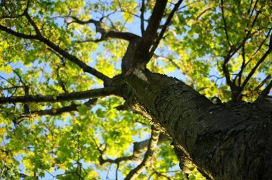 Apel prezydenta do PKP ws. wycinki drzew