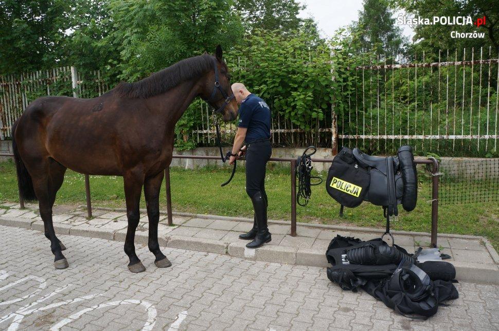 Lekcja ekologii z chorzowską policją konną