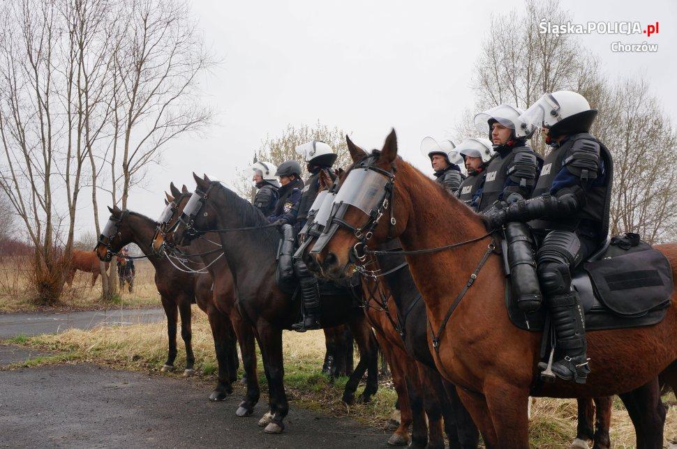 Policja konna w Chorzowie rekrutuje
