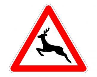 Uważajmy na dzikie zwierzęta na drodze