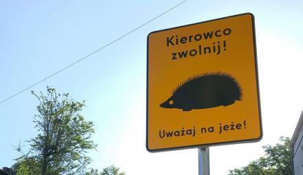 """""""Kierowco zwolnij. Uważaj na jeże!"""". Takie znaki pojawiły się ostatnio w Chorzowie."""