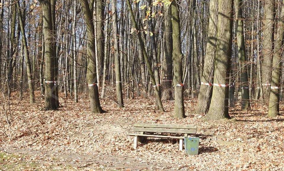 Marsz milczenia dla drzew w Parku Ślaskim. Jest oświadczenie zarządu Green Park Silesia