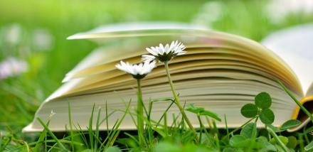 Tysiące książek na wolności - trwa wielka zbiórka w Chorzowie