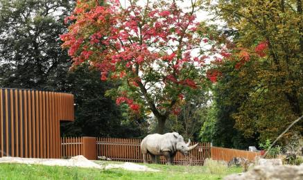 Śląski Ogród Zoologiczny zmienia zasady funkcjonowania na jesień. Co z 1 listopada?